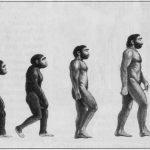Darvinova teorija evolucije uzburkala Odbor za obrazovanje u Srbiji